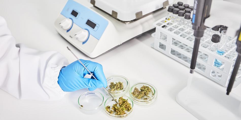 Cannabis Medicinal Colombia