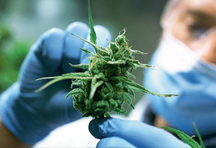 Asocolcanna Cannabis Medicinal