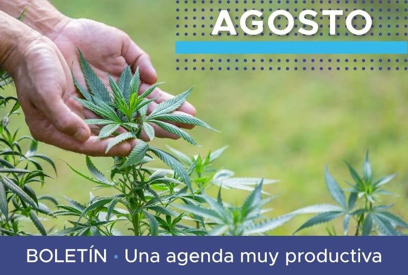 Boletín Asocolcanna agosto