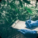 Cadena Productiva Cannabis: