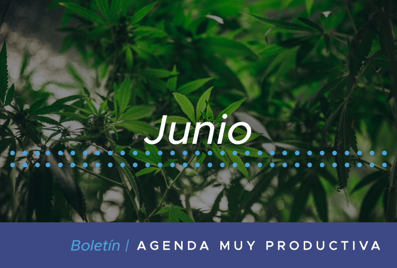 Boletin-Jun_Banner-web